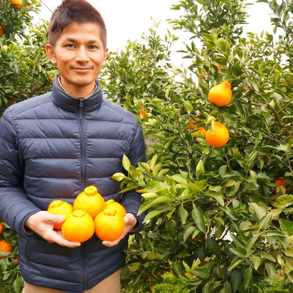清見 家庭用 15kg 箱込15kg 果物/柑橘類通販