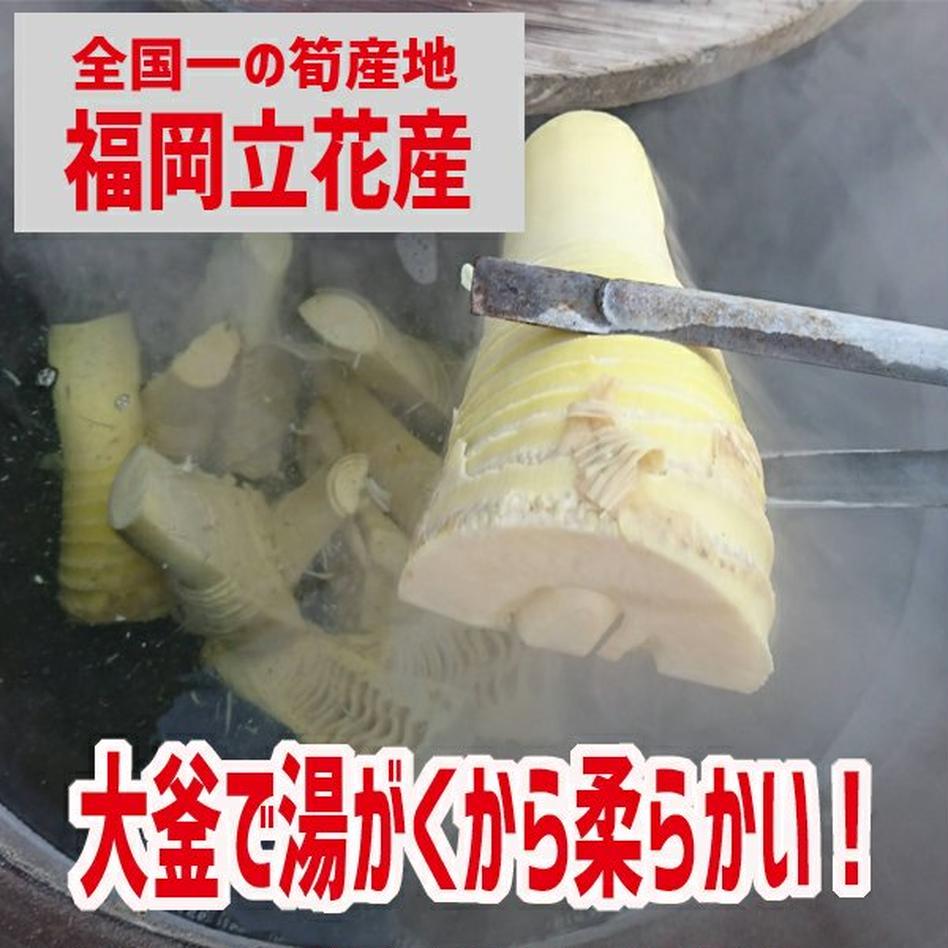 大釜湯がきたけのこ 1.5kg 1.5kg 野菜/山菜通販